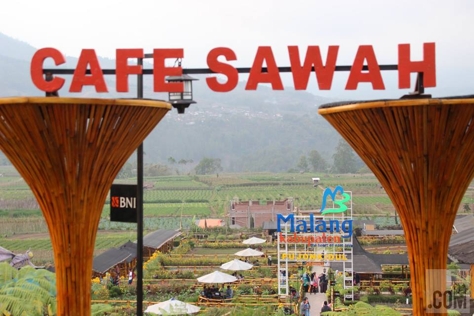 cafe sawah pujon